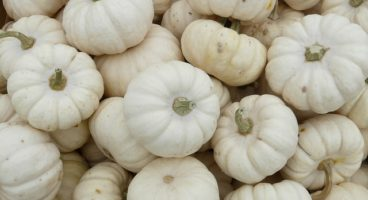 mini-pumpkins-61281_640