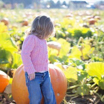 giant-pumpkins-955603_640